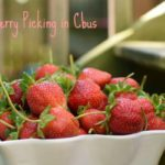 Strawberry Season in Cbus