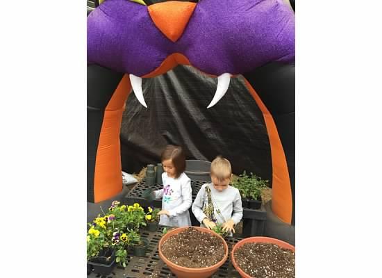pumpkin patch demonye