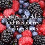 "10 ""You Pick"" Berry Farms near Columbus to check out this Summer!"
