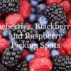 berries cover