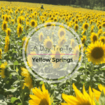A Day Trip to Yellow Springs