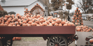 pumpkin farms in Columbus