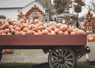 pumpkin farms in Columbus