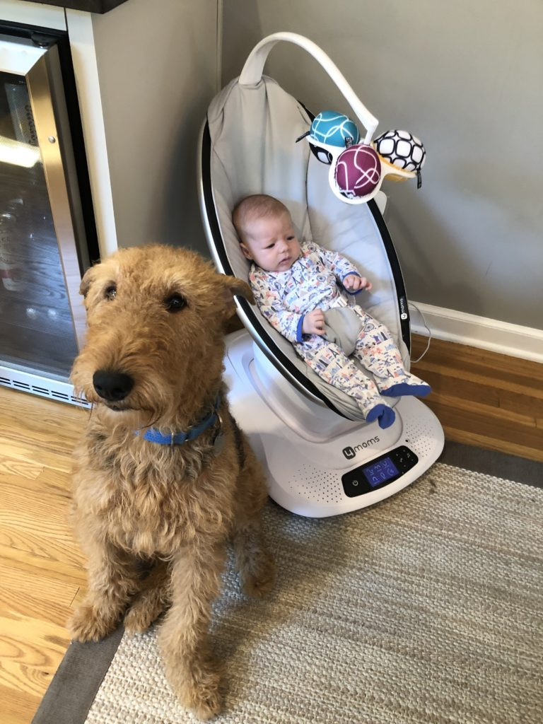 dog and baby relationship