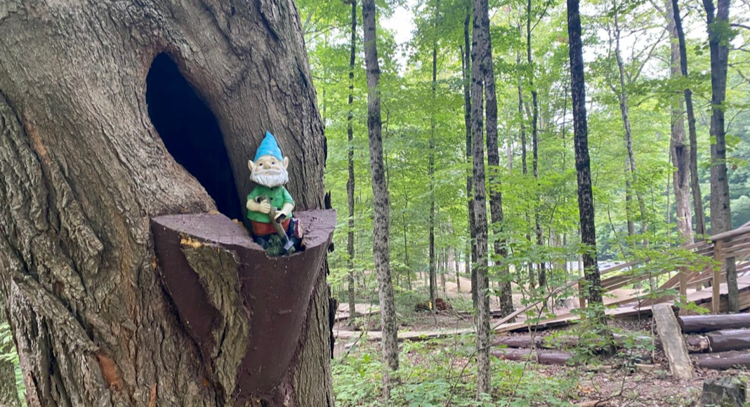 gnome in the tree at a park