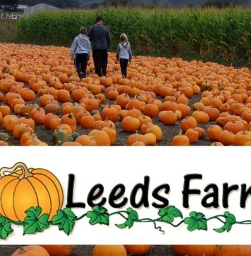 Pumpkin Patch Farms in Columbus