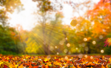 simple fall activities